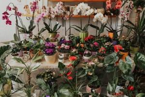 cvetlicarna_vrtnica-7-min